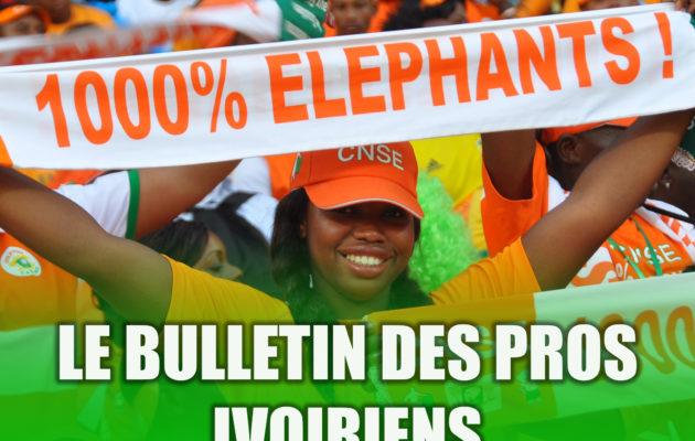 bulletin des pros - éléphants